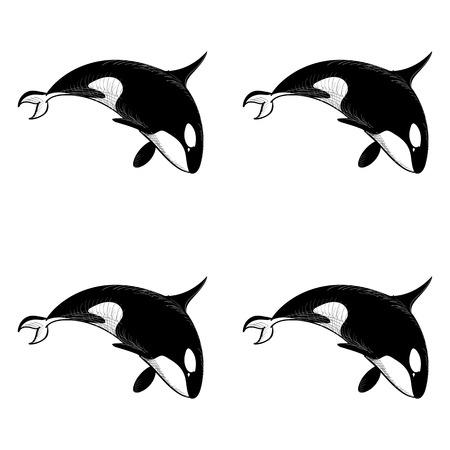 patrón transparente grampus orca en el estilo de dibujo sobre fondo blanco. Salvaje papel pintado animal del océano. Ilustración del vector para la impresión sobre tela. Ilustración de vector