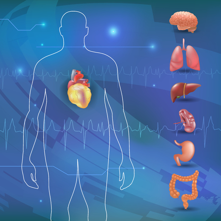 large intestine: obesity-related diseases info graphics with human organs