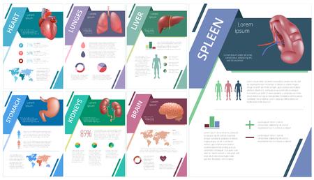Interne menselijke organen infographic milt Stock Illustratie