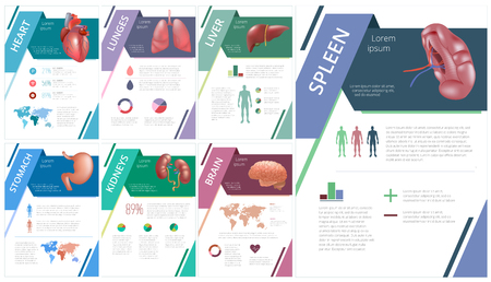Internal human organs infographic spleen