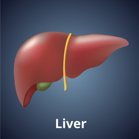 Realistic human liver isolated on dark gray background.