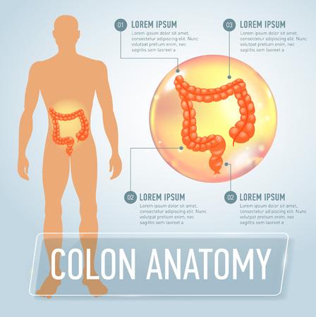 Vector colon infographics banner illustration