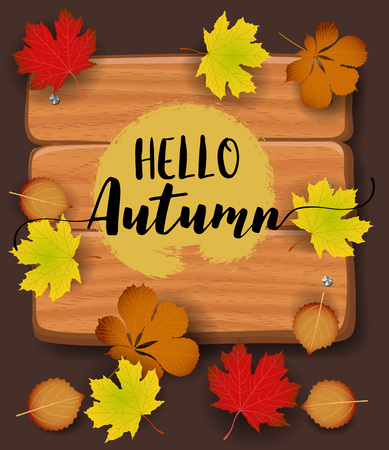 Hello Autumn banner. paper colorful tree leaf maple, rowan leaves on wood texture background. Autumnal design for fall season banner, poster, web site, paper cut out art style, vector illustration