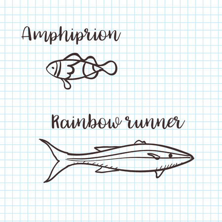 Clownfish Anemonefish, Ocellaris clownfish, Amphiprion ocellaris and Rainbow runner, hand drawn doodle, sketch in pop art style, vector doodle illustration 向量圖像