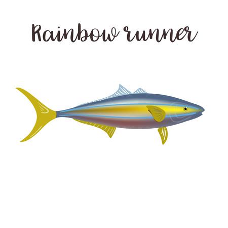 Rainbow runner vector realistic style illustration. Sea fish cartoon