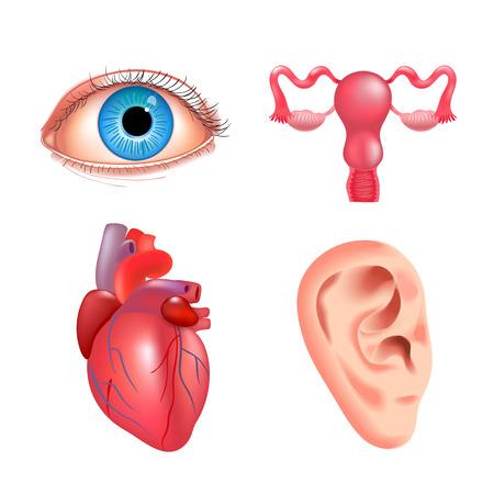 Internal organs icon set Vettoriali