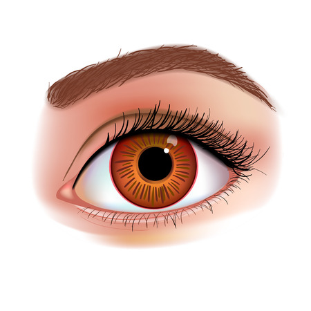 Womens Eye realistic vector illustration