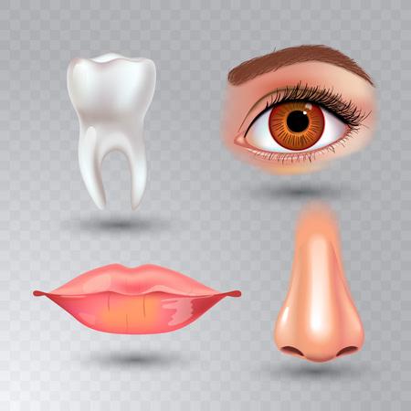 Vector internal organs icon set on transparent background