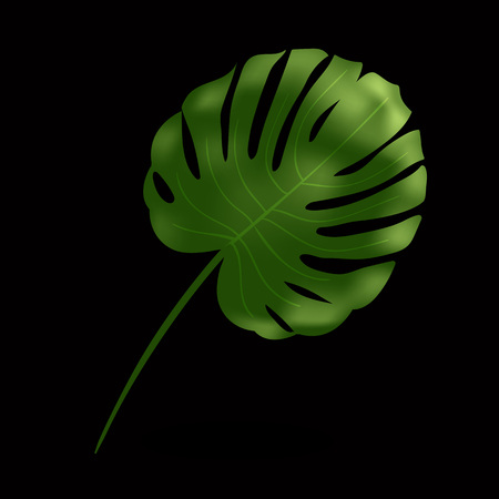 Green monstera leaf. Tropical plant. Design element for fabrics, invitations, clothes and other. Realistic vector illustration isolated on black background.