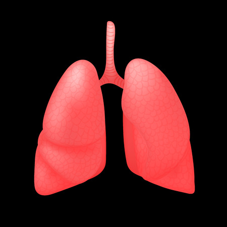 Realistic human organ isolated on black background. Human anatomy part lungs. Vector illustration