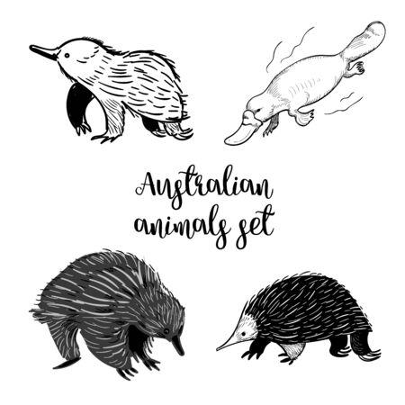 Animals of Australia set of sketshes. Echidna, platipus doodle isolated on white background.