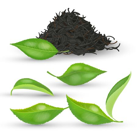 Set of realistic tea leaves with fresh green and dried foliage isolated on white background vector illustration. Black Pile dry tea