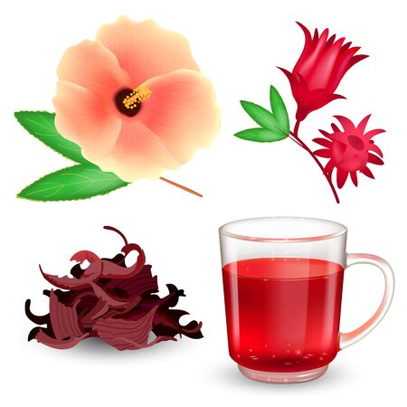 Hibiscus tea set. Roselle red tea in a glass mug, dried tea, bract and flower isolated on a white background. Realistic vector illustration.