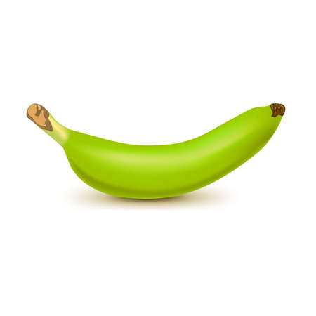 Realistic green banana isolated on white background. Tropical fruit. Realistic vector illustration Vector Illustratie