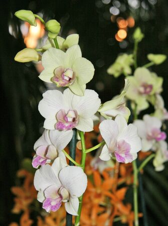Beautiful, white orchids in a blooming garden Reklamní fotografie