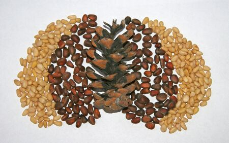Cedar brown and yellow nuts are lined with a cone. Brown, beige, white, contrast. On a white napkin with a pattern are nuts and a cone. Nuts in the shell and peeled pine cones. Cedar seeds are spread next to each other. Picking nuts.