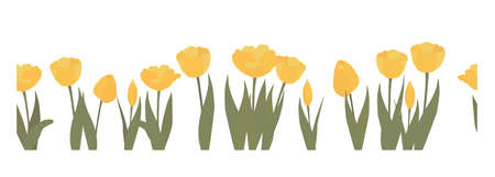 Seamless vector border with yellow flowers on a white background. Tulips. Suitable for textiles, tape, books design interior decoration products printing.