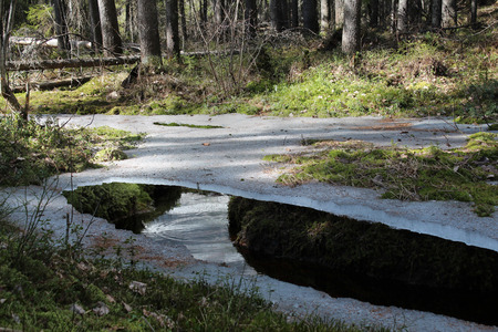 thawed: Spring in Karelia  Thawed patches