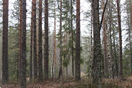awaking: Wood  Awaking  Early morning