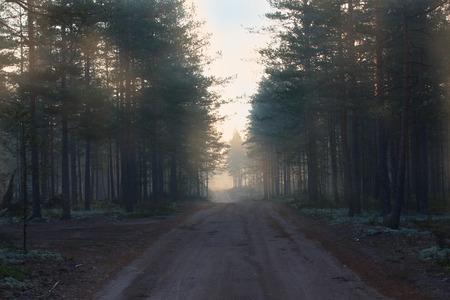 earth road: Strada sterrata nella foresta. Mattina presto.