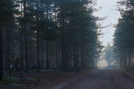 leningradskaya: Earth road in the forest