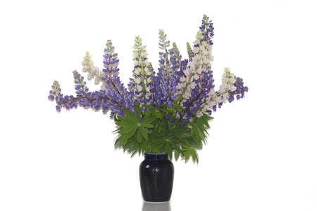 lupines: A bunch of lupines flowers on the vasa. Stock Photo