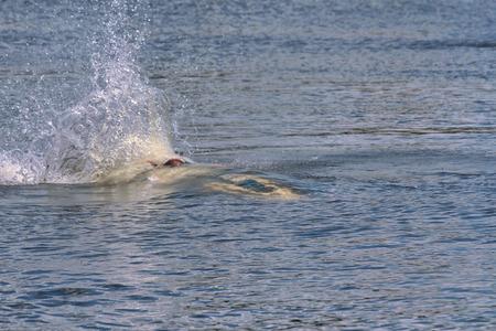 agachado: Action Fotografía Hombre en jet ski. Subacuático.