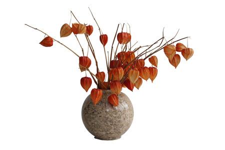 alkekengi: Physalis tomatillo in the vase