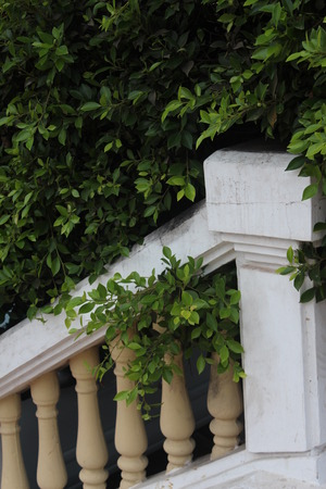 guard rail: A staircase in landscape design.