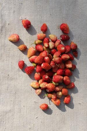 sacking: The wild strawberry on a sacking.