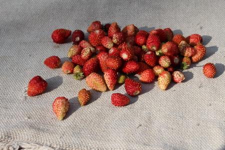 'wild strawberry: The wild strawberry on a sacking.