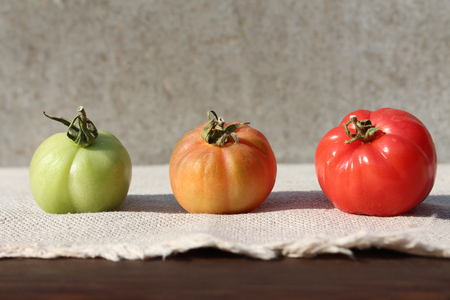 maturity: Three tomatoes of different maturity.
