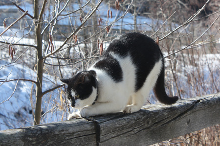 hand rail: Cat in the nature.