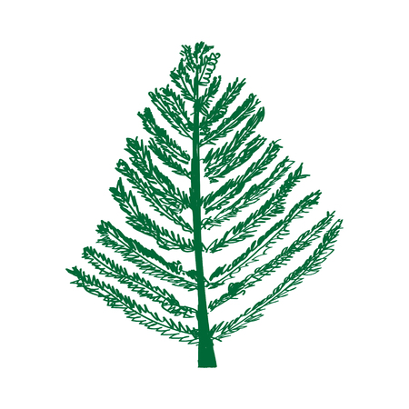 Fir tree isolated vector. Christmas tree, New Years tree.