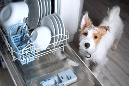 Dishwasher Dog - cute Jack Russell doggy with dishwasher mashine