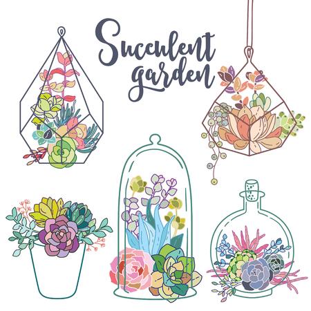 Vector glass terrariums with succulents set