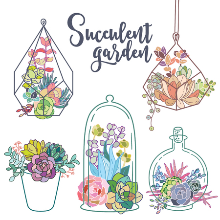 Vector glass terrariums with succulents set
