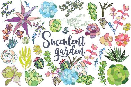 compositions: Set of floral succulent elements for your compositions