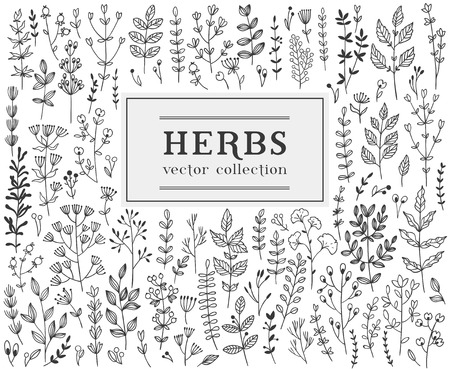 twigs: Herbs and twigs set for your design. Illustration