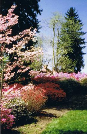 Azaleas op Biltmore Estate Stockfoto