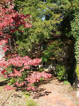 Secluded path and red leaves