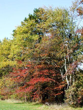Autumn in Kings Mountain, NC Reklamní fotografie