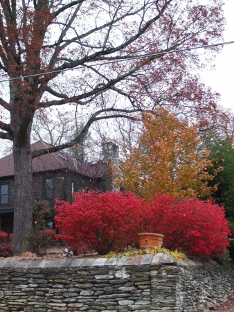 Burning bushes at the Inn at the Ragged Gardens