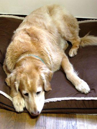 tucker: Sleepy Tucker Stock Photo
