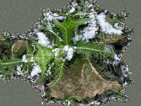 Fern in the snow - fractal