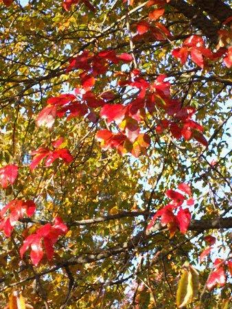 Herfst bomen - olieverf op doek textuur
