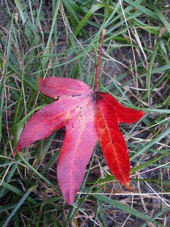 Maple Leaf - olieverf op doek textuur Stock Illustratie