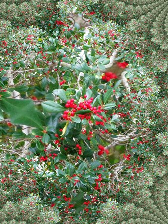 Holly tree fractal