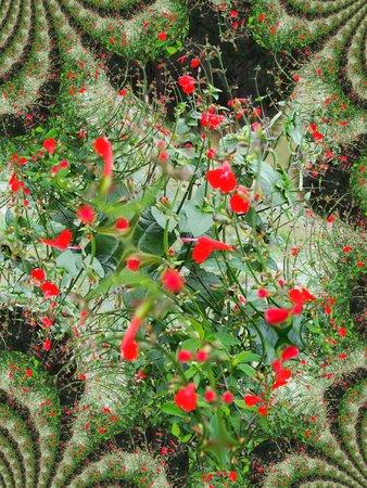 Rode bloemen fractaal Stock Illustratie