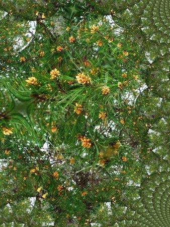 Pine cones fractal